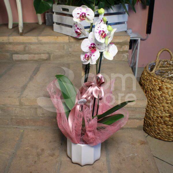 Orchidea Poggio Rusco