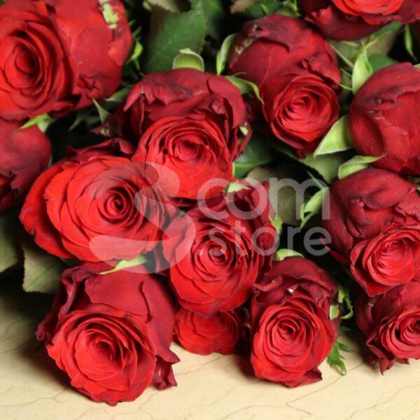 Rose Rosse Poggio Rusco